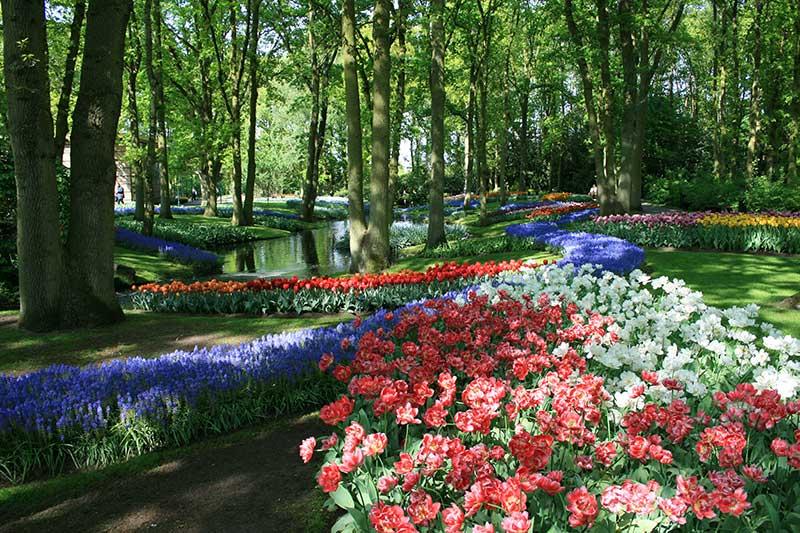 Ogród Keukenhof, Holandia