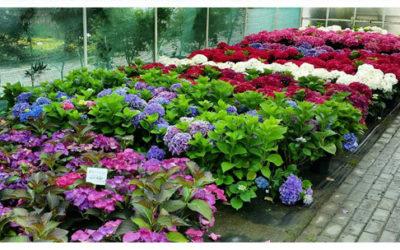 Dobór roślin w ogrodzie