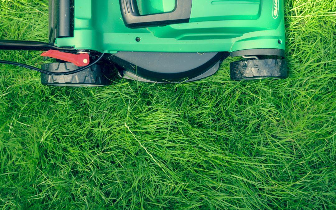 Trawnik z rolki czy siewu