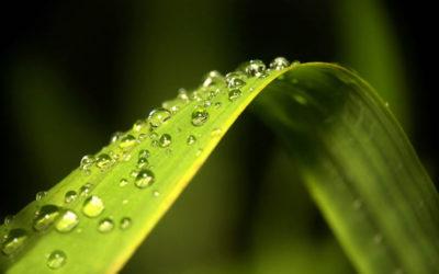 Błękitno-zielona infrastruktura dla łagodzenia zmian klimatu – narzędzia strategiczne i rozwiązania techniczne
